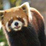 千葉動物公園の風太君の孫の名前が決定したそうです!