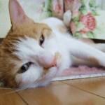 寝ても疲れが取れない原因は?ストレスが溜まると睡眠の質が下がる?