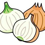 新玉と玉ねぎの違いは?それぞれの特徴を生かして美味しく料理!