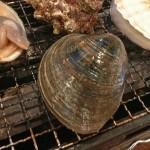 ホンビノス貝の砂抜きの仕方とその後の保存の仕方は?